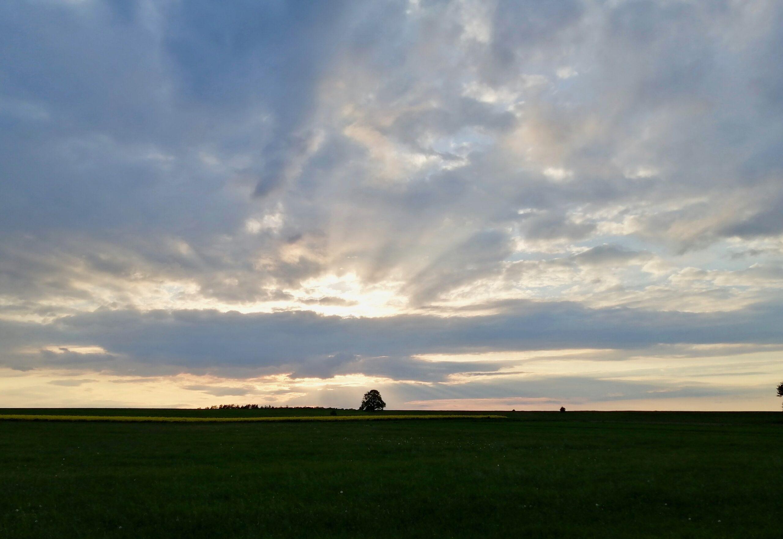 zachód słońca idrzewo